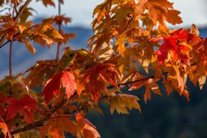 Autumn Accidents and Injuries Tennessee